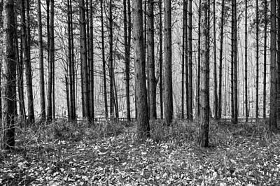 Keith Richards - Woods by Svetlana Sewell