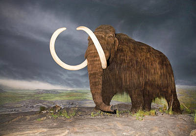 Rose - Wooly Mammoth by Buddy Mays