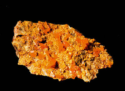 Photograph - Wulfenite by Millard H. Sharp