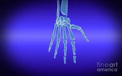 Human Joint Digital Art - X-ray View Of Human Hand by Stocktrek Images