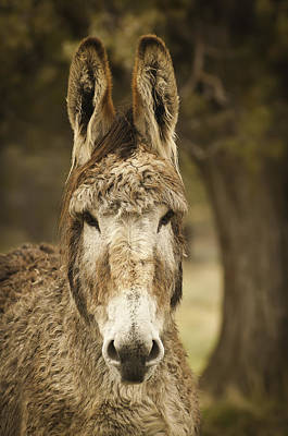 Photograph - Ye Olde Jackass by Sherri Meyer