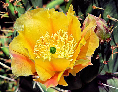 Photograph - Yellow Cactus Bloom  by Sandra Selle Rodriguez