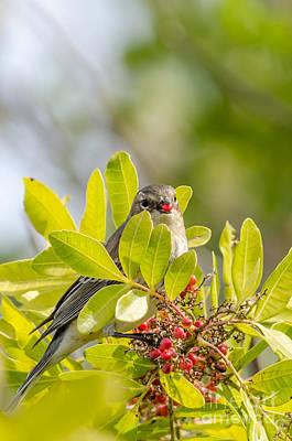 Photograph - Yellow-rumped Warbler by Debra Martz