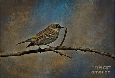 Photograph - Yellow-rumped Warbler by Elizabeth Winter