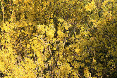 Photograph - Yellow Spring by Cora Wandel