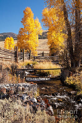 Photograph - Yellowstone Institute In Lamar Valley In Yellowstone National Park by Fred Stearns