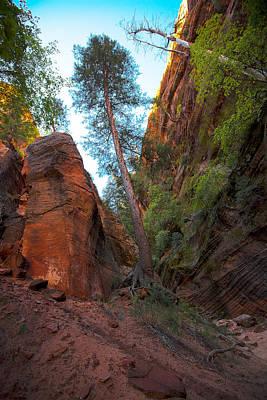 Photograph - Zion National Park Utah Usa by Richard Wiggins