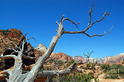 Photograph - Zion Reaching Tree by Debra Thompson
