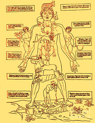 Photograph - Zodiac Man Medical Astrology by Science Source