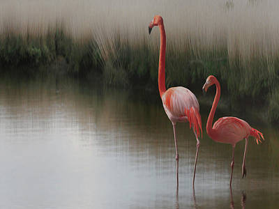 Flamingo Photograph - ... by Anna Cseresnjes