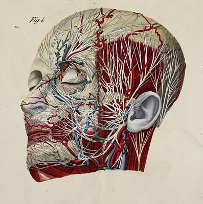 Anatomical Drawing Art Print