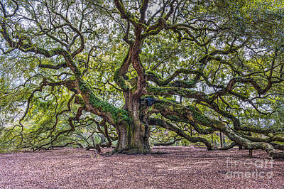 Photograph - Mystical Angel Oak Tree by Dale Powell