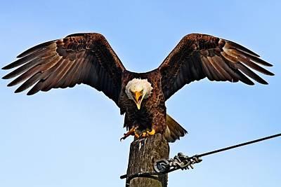 Photograph - Bald Eagle by Ira Runyan