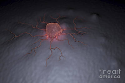 Photograph - Cancer Cell by Science Picture Co