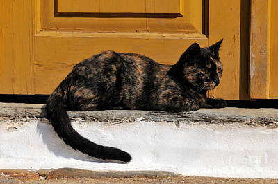 Travel Photograph - Cat In Hydra Island by George Atsametakis