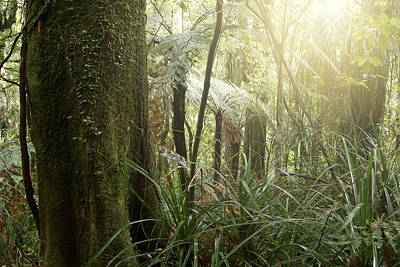 Scenic Woodlands Photograph - Forest Light by Les Cunliffe