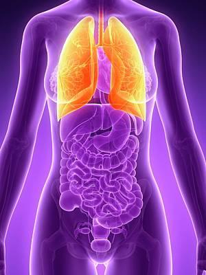 Internal Organs Photograph - Human Lungs by Sebastian Kaulitzki