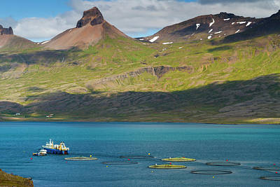 Icelandic Fish Photograph - Iceland by Mikel Bilbao