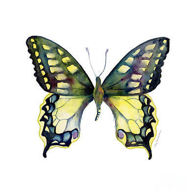 Animals Paintings - 20 Old World Swallowtail Butterfly by Amy Kirkpatrick