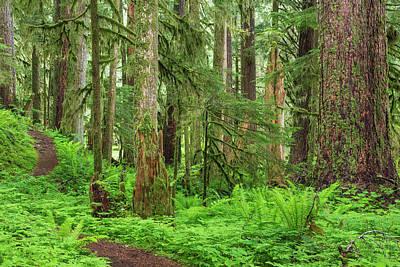 Olympic National Park Photograph - Usa, Washington, Olympic National Park by Jaynes Gallery