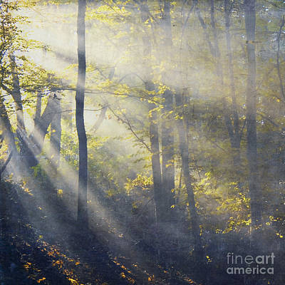 Licht Wall Art - Photograph - 2000 Rays by Dirk Wuestenhagen