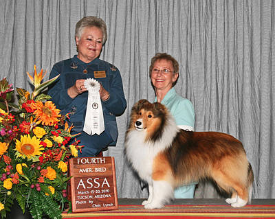 Sable Sheltie Photograph - 203 4th American Bred Dog Adohr Penelane's Patent Pending by Chris Lynch
