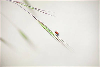 Insect Photograph - ... by Anna Cseresnjes
