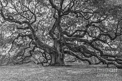 Photograph - Angel Oak Tree In Black And White by Dale Powell