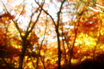 Leaves Changing Photograph - Autumn by Les Cunliffe