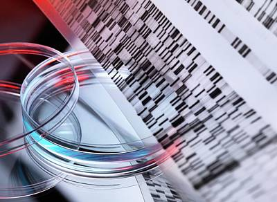 Dna Photograph - Genetic Research by Tek Image