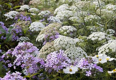 Phlox Paniculata Photograph - Great Dixter, Northiam, Sussex, Uk by Science Photo Library