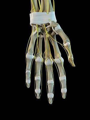Human Nervous System Art Print by Sciepro