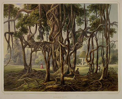 Banyan Tree Photograph - Views Of Calcutta And Its Environs by British Library
