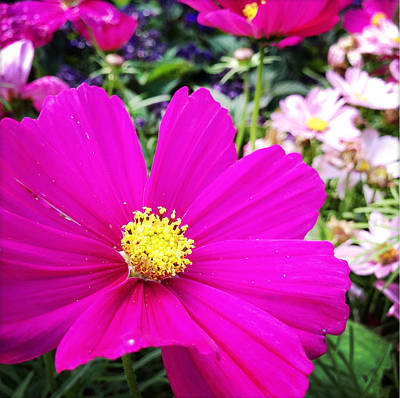 Royalty-Free and Rights-Managed Images - Flowers by Les Cunliffe