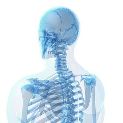Human Head Photograph - Human Skull by Sebastian Kaulitzki