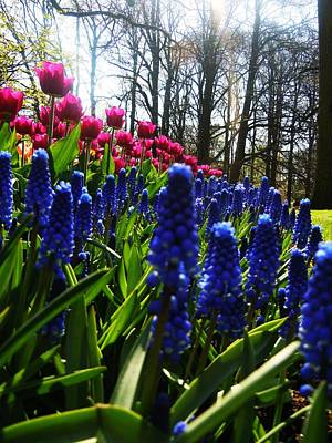 Vermeer Rights Managed Images - Keukenhof Gardens Royalty-Free Image by Christopher Hoffman