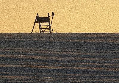 Bird Sitting On The Perch Original