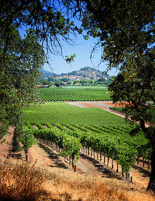 2214 - Napa Valley Winery Original by Deidre Elzer-Lento