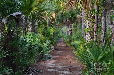 Photograph - 24- Everglades Trail by Joseph Keane