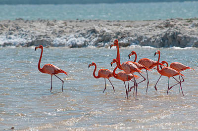Digital Art - Flamingos by Carol Ailles