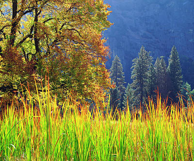 Large Oak Tree Photograph - Usa, California, Yosemite National Park by Jaynes Gallery