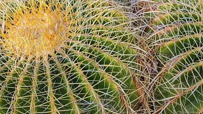 Barrel Cactus Photograph - Usa, New Mexico, Bosque Del Apache by Jaynes Gallery