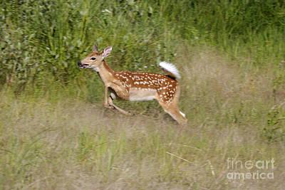 White-tailed Deer Art Print by Linda Freshwaters Arndt