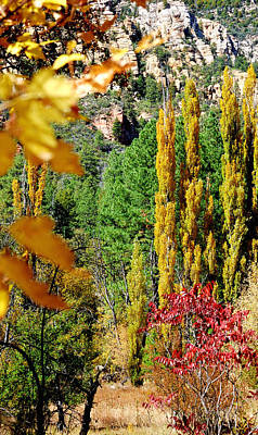Jerry Sodorff Royalty-Free and Rights-Managed Images - 23636 Oak Creek Canyon by Jerry Sodorff