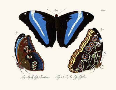 Blue Swallowtail Drawing - Butterflies by Splendid Art Prints