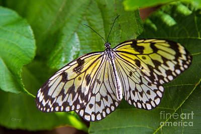 Photograph - Butterfly by Rene Triay Photography