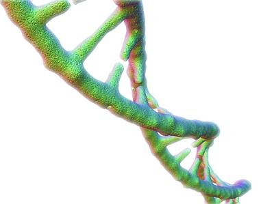 Dna Molecule Art Print by Alfred Pasieka/science Photo Library