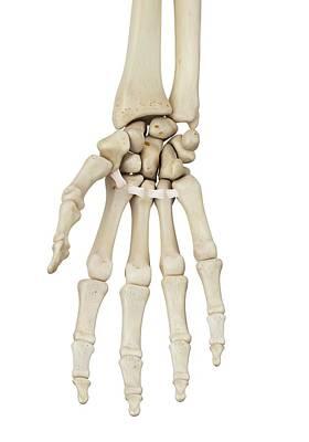 Human Hand Anatomy Art Print by Sciepro