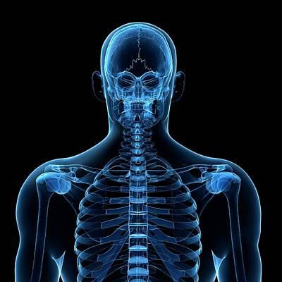 Human Head Photograph - Human Spine by Sebastian Kaulitzki