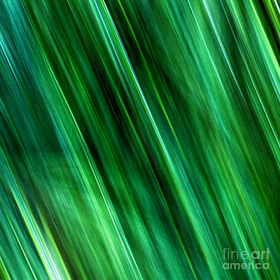 Photograph - Meditations On Movement In Nature by Joanne Bartone